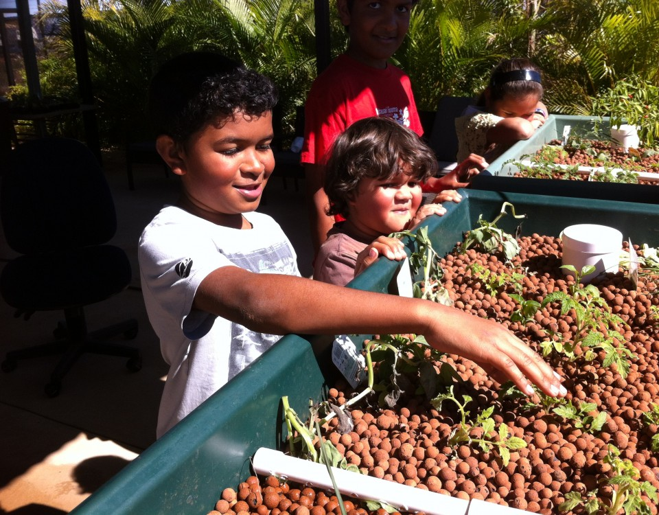 WGAC-Aquaponics WGAC - Wintawari Guruma Aboriginal Corporation